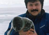 Cub of a Baikal Seal