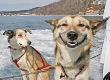 Dogs can also smile)))