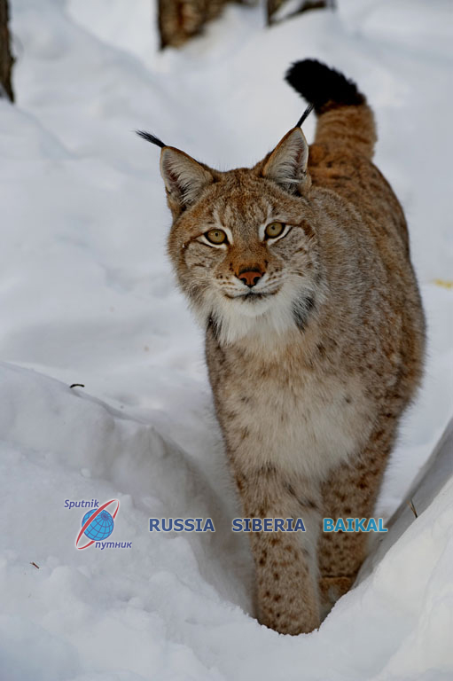 Animals And Plants Russia Siberia Baikal